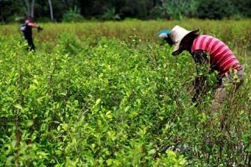 Lucha contra narcos implica más que erradicar cultivos de coca, dice parlamentario ecuatoriano